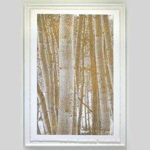 Aspen Woodlands