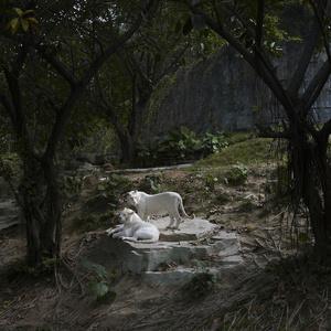 Dreamcity, Tigers, Chimelong Paradise, China