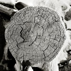 Stump, CA