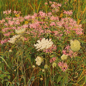 Wildflowers No. 6