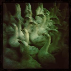 Les oiseaux passent en fuyant #12