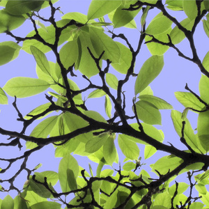 Magnolia Series - Spring