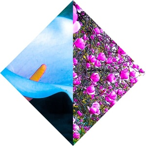 FloralHiss