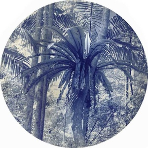 Natura Pacifica IV
