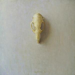 Guinea Pig Skull