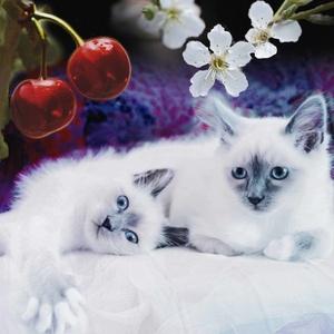 Kattungar Med Körsbär