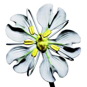 Brendel Conium Maculatum