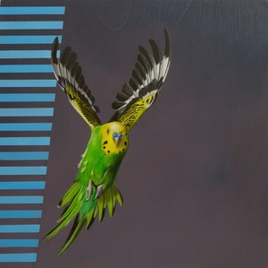 Visual Navigation in Budgerigar Flight