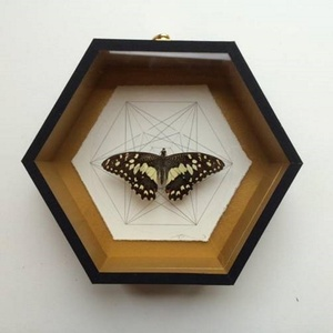 Geometry of the Butterfly – Speckled Brown