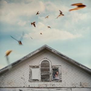 The Barn Swallows