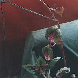 Plant #11, Bethnal Green