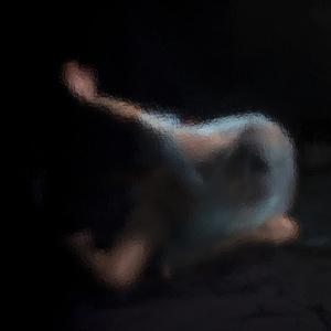 Danse la nuit (Dance at night)