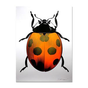 Ladybug (orange)