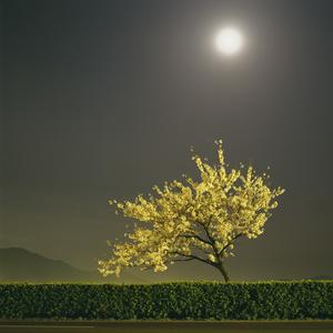 Starlight Gyeongju