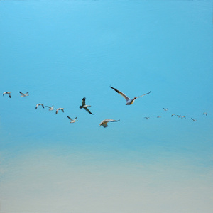 Snow Geese in a Blue Sky