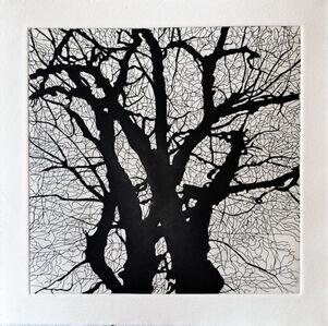 Tree Series: SSA III