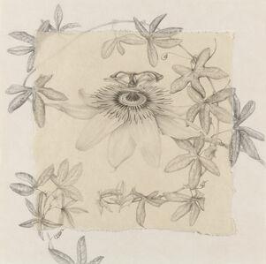 Pasiflora II