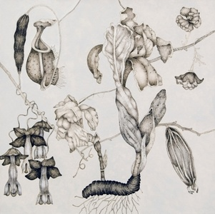 Bianco Eden Series IV