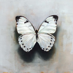 Butterfly A.b