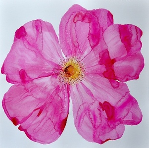 Big Wild Rose (#14.2.NA)