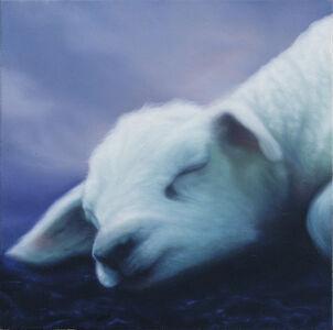 Lamb Bo
