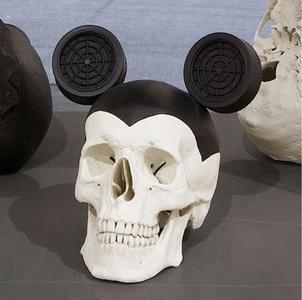 Cráneo de norteamericano contemporáneo