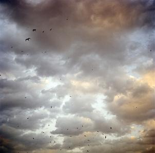 Birds over the Bosphorous (Istanbul, Turkey)