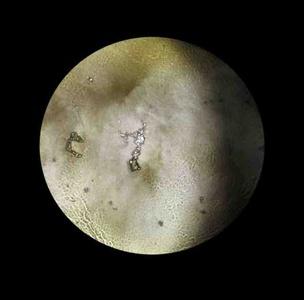 Dark Moon IV