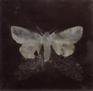 Moth on moth