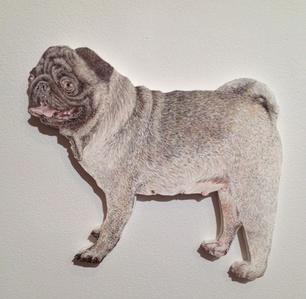 Dog (Pug)