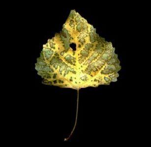 Photosynthesis Leaf #1