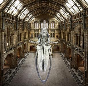 Balaenoptera Musculus | London, UK