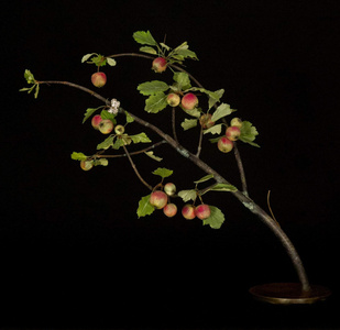 Crabapple Branch with Hastata