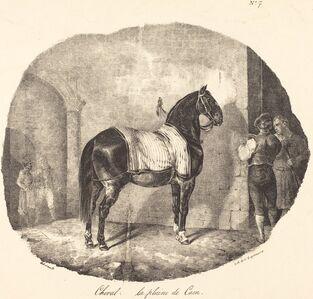 Cheval de la plaine de Caen
