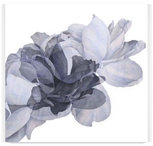 Blooms [study 417 b+d, 7]