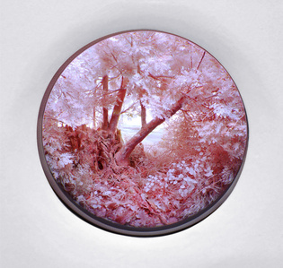 Pink Forest with Stump