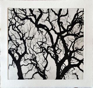 Tree Series: SAMA III