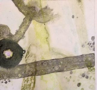 Algae, Slide 23