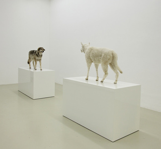 Wolf im Schafspelz - Schaf im Wolfspelz. Ein Verwandlungskunststück