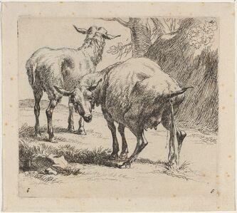 Set of Sheep [plate 4]
