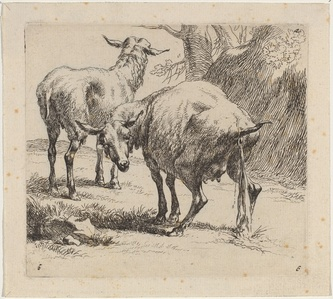 Set of Sheep [plate 4]