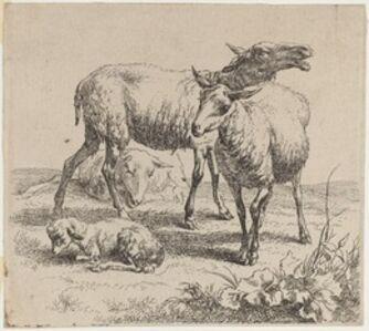 Set of Sheep [plate 6]