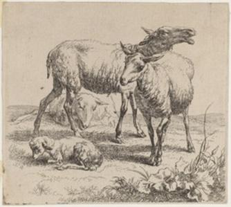 Set of Sheep [plate 6]