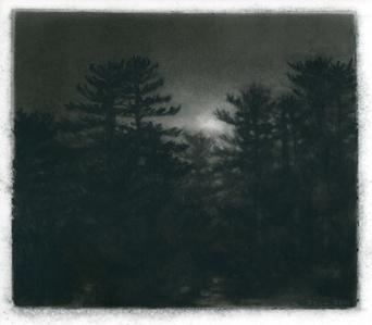 Pines, Dusk