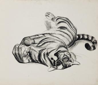 Big Cats: Tiger Sunning