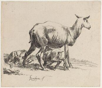 Set of Sheep [plate 5]