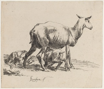 Set of Sheep [plate 5]
