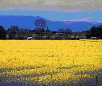 Mustard Bloom (Napa Valley, California) (The sale of this piece benefits the nonprofit Zenith Community Arts Foundation)