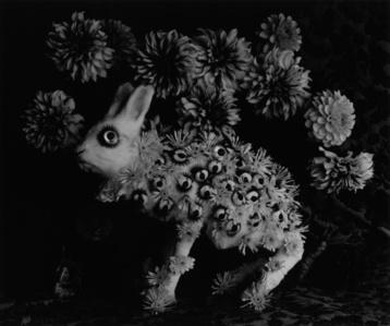Rabbit and Eye