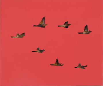 August Birds